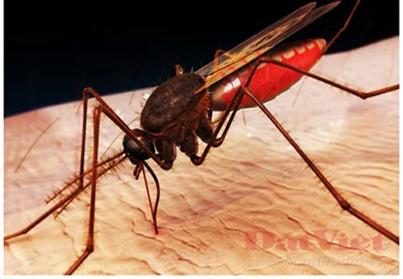 Côn trùng muỗi