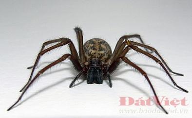 Côn trùng nhện